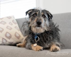 dog-on-sofa