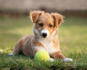 cute-puppy--with-ball