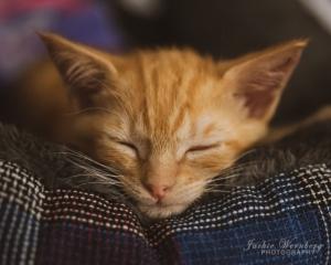 ginger-kitten-face-sleeping-tartan-bed