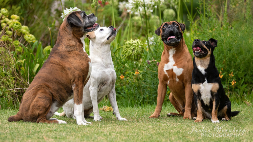 Four dogs sitting in a garden