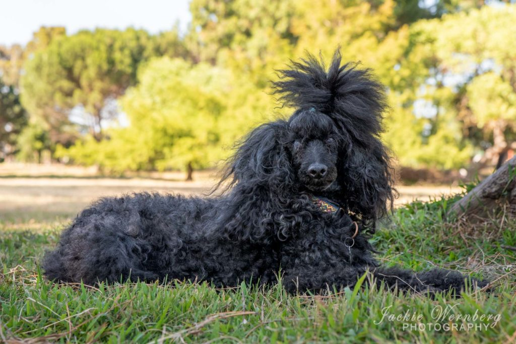 dog photography in the park 02