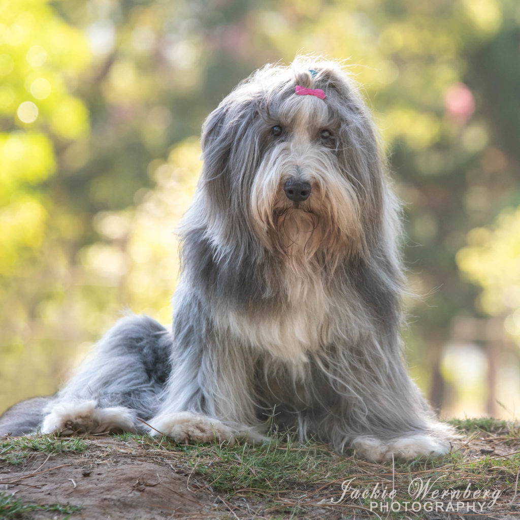 dog photography in the park 03