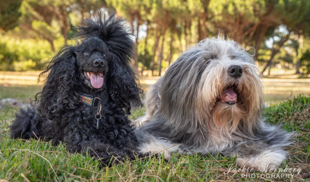 dog photography in the park 01