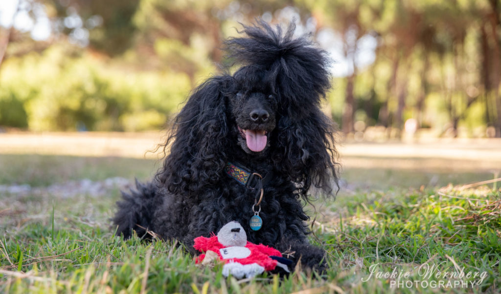dog photography in the park 04