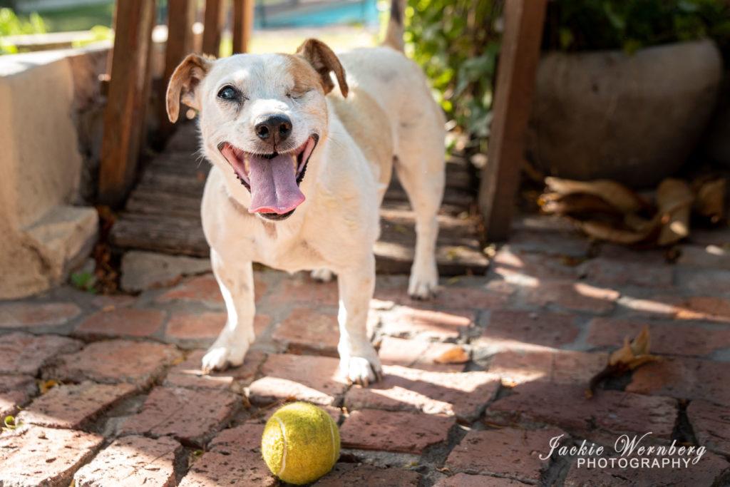 Senior dog 03