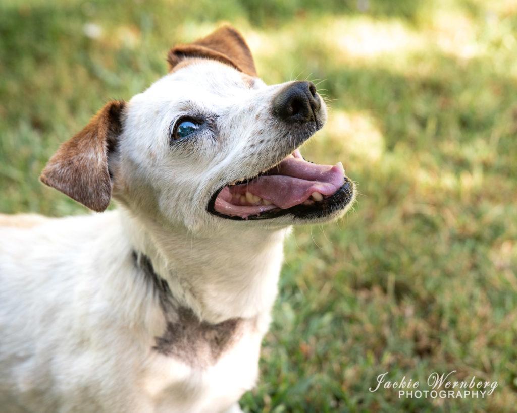 Senior dog 02