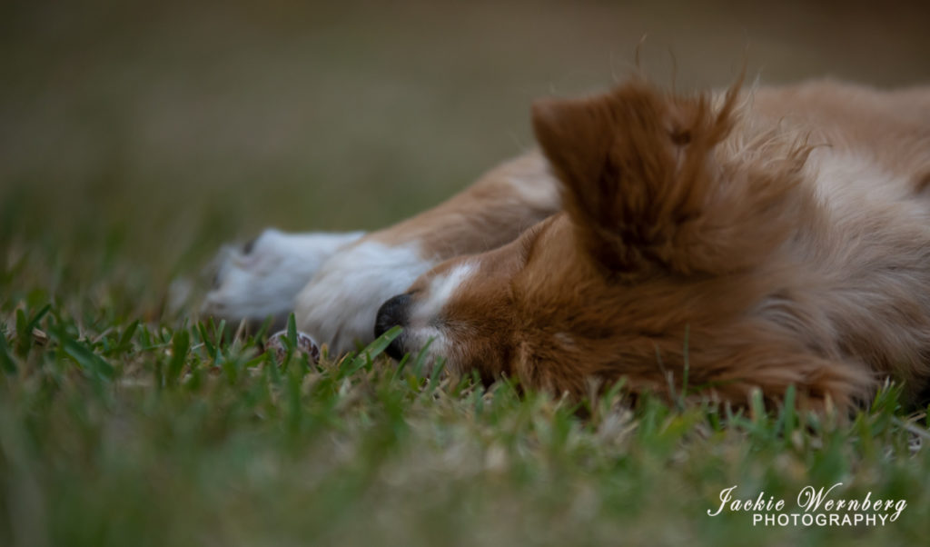 puppy in the grass with snail
