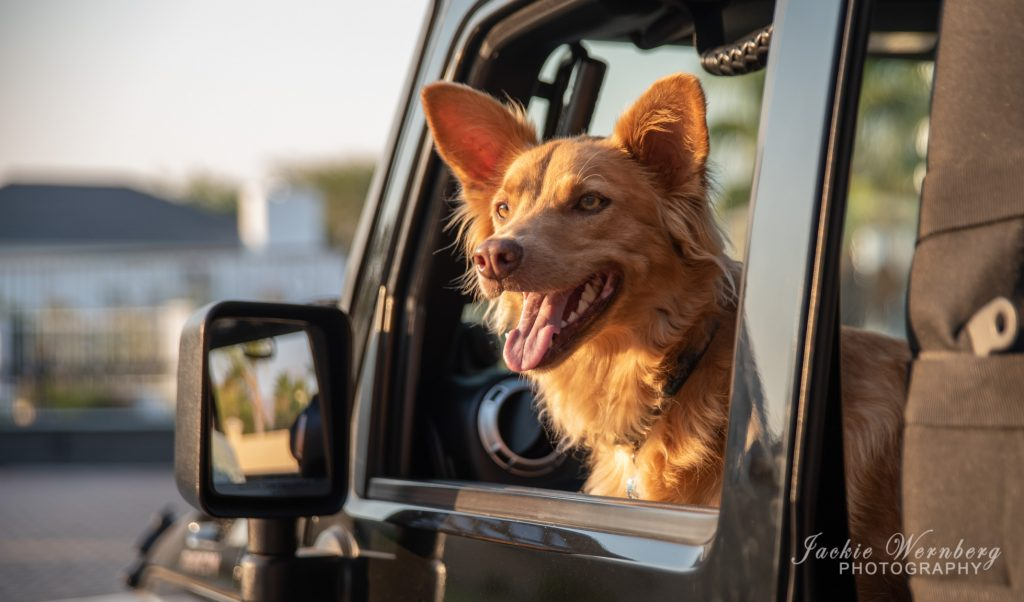 commercial-dog-photoshoot-02